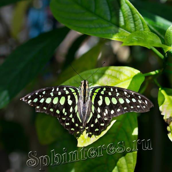 бабочка в музее питер