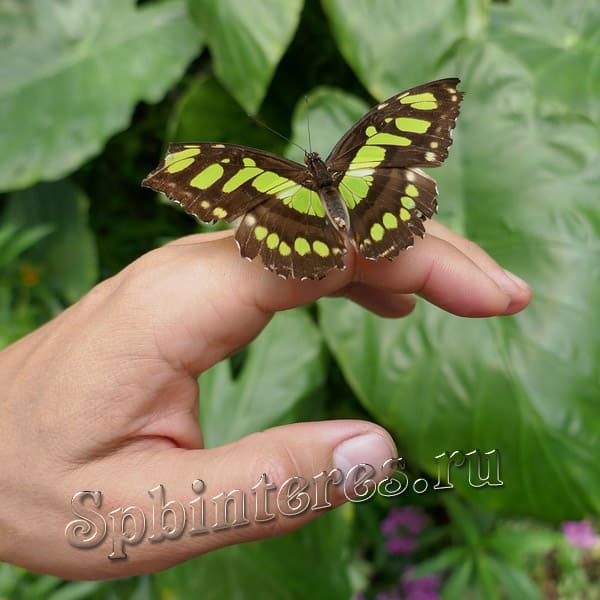 Сад бабочек спб