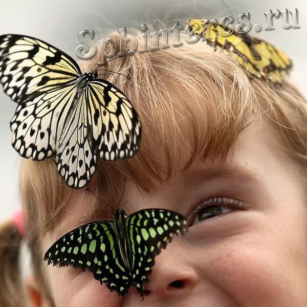 Живые бабочки музей