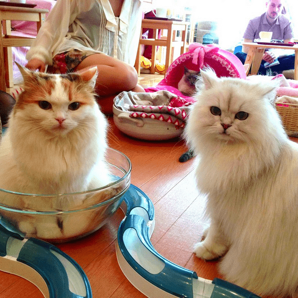 Республика кошек СПб