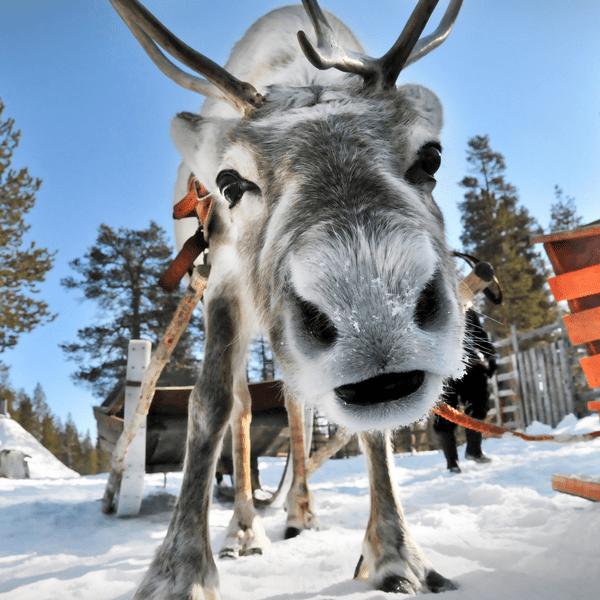 Лапландия парк на крестовском