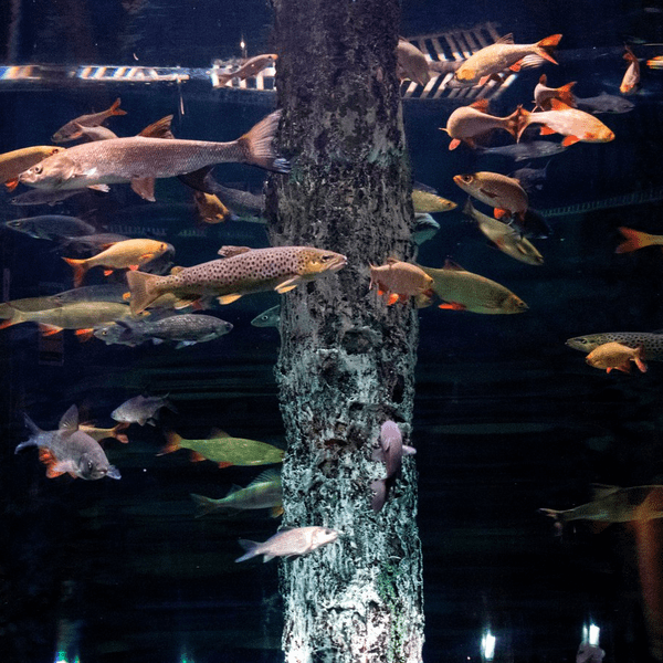 океанариум в санкт-петербурге