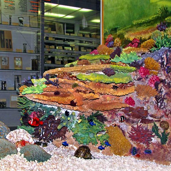 Морской риф - экспонат