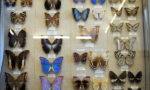 Зоологический музей в Санкт-Петербурге - цена билета, фото, адрес
