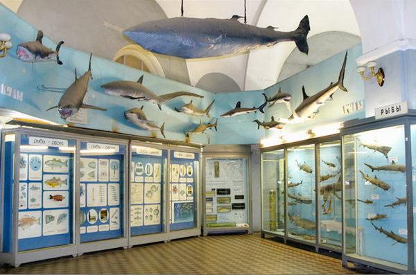 Рыбы в зоологическом музее