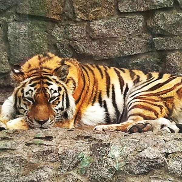 зоопарк санкт-петербурге