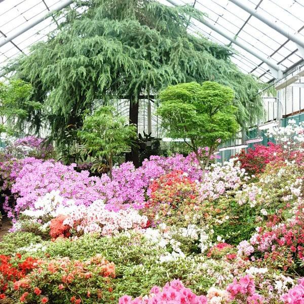 ботанический сад спб