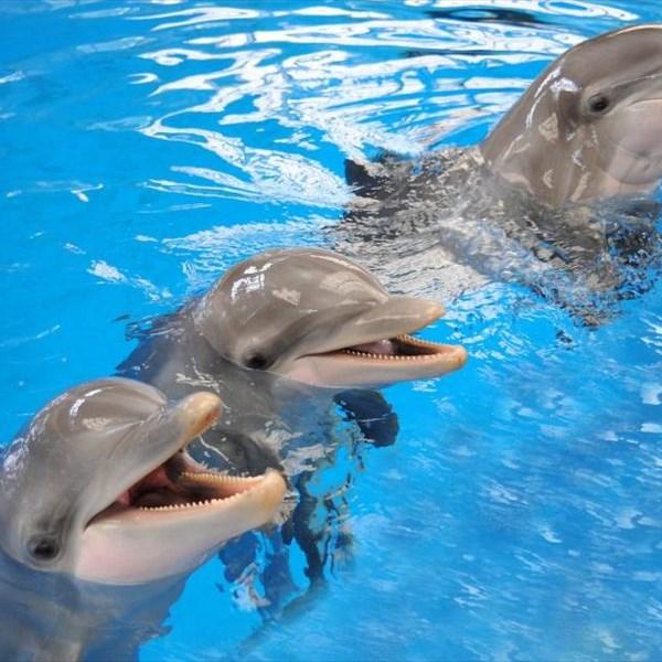Дельфинарий спб