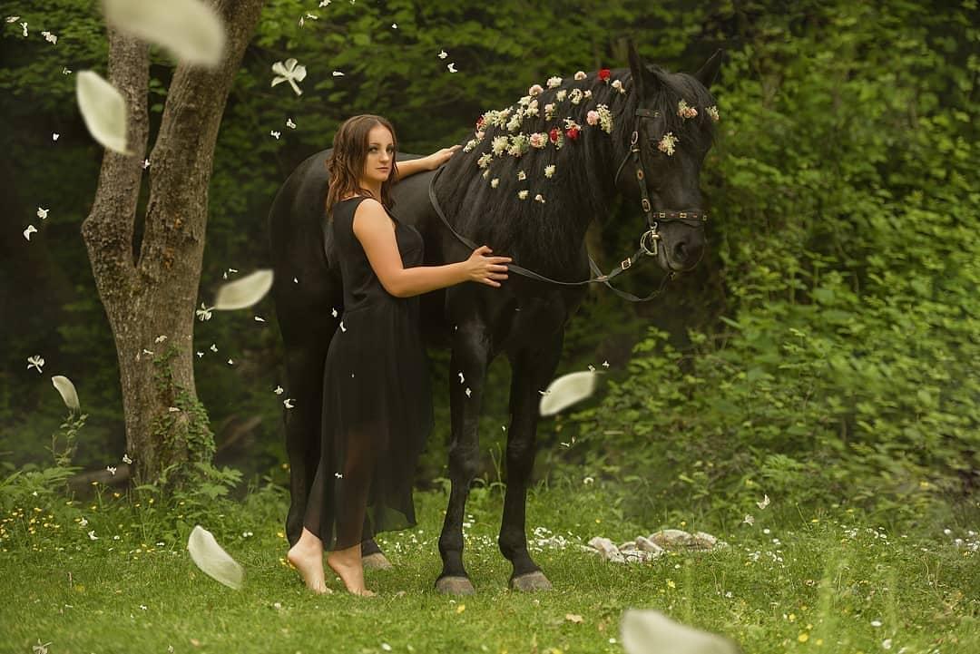 Лошади Санкт-Петербург