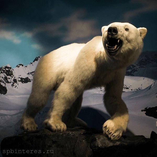 чучело белого медведя спб