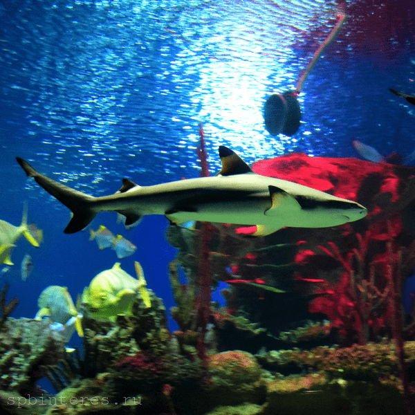 акула в океанариуме