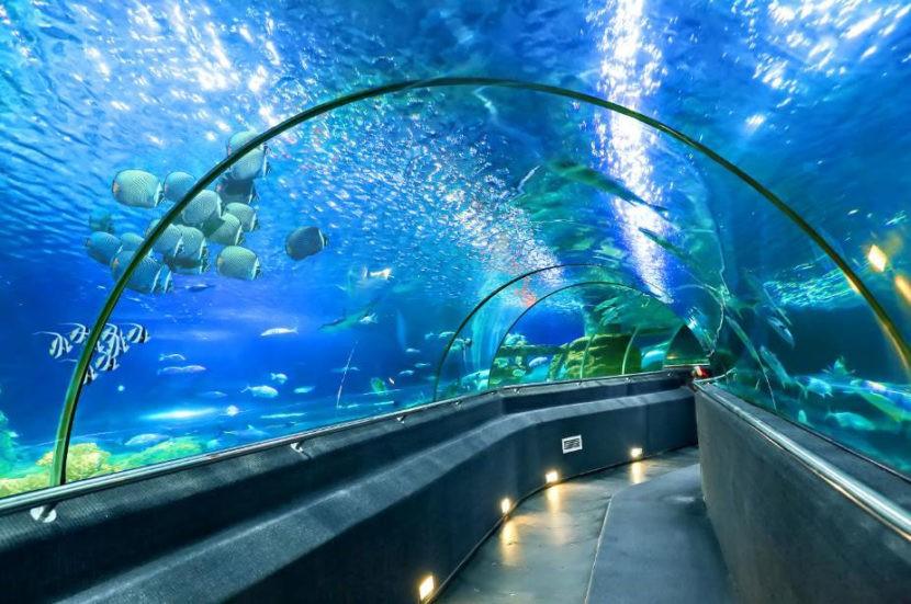 Тоннельный океанариум