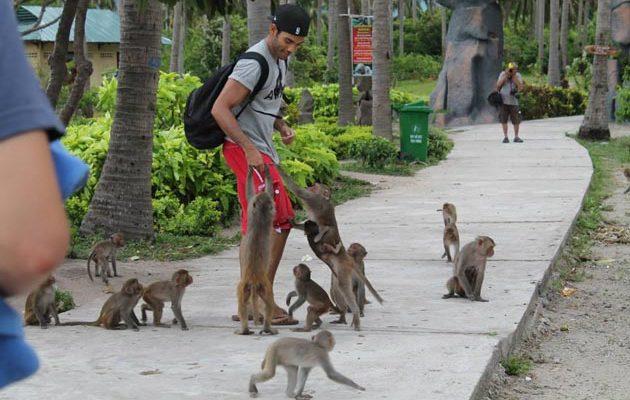 Остров обезьян в Нячанге - где находится, как добраться самостоятельно