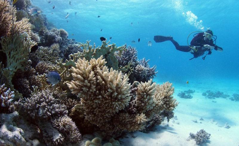 Подводный мир Египта