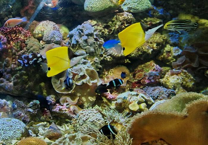 Подводный Мир Нячанга