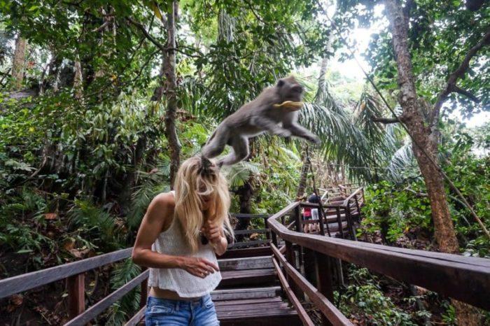 Лес обезьян Бали