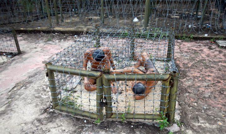 Клетки для пыток