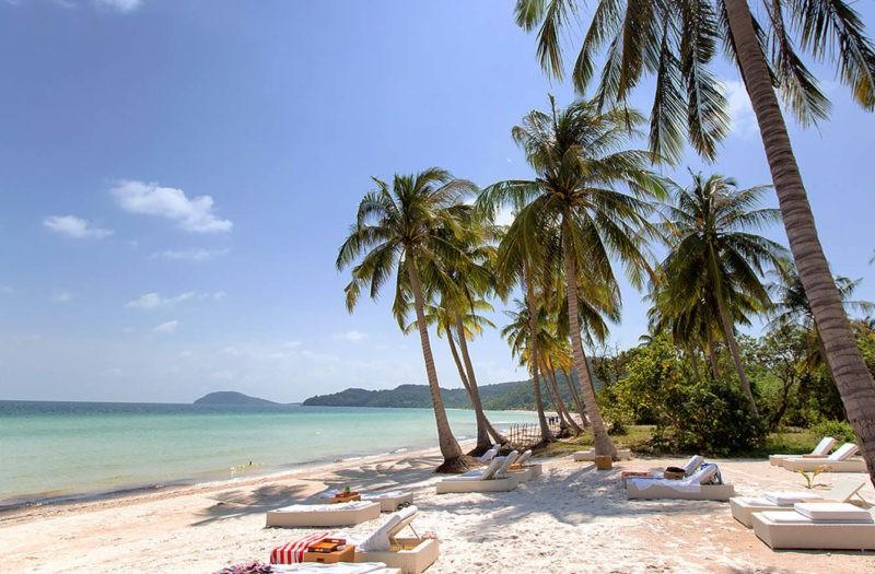 Пляж с пальмой