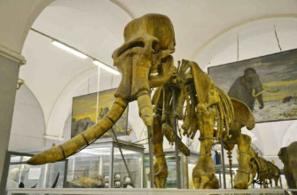 Зоологический музей СПБ