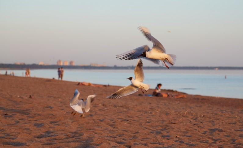 Пляж Ласковый