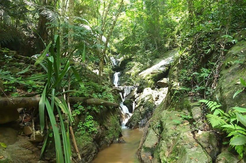 Khao Phra Thaeo Non-Hunting Area