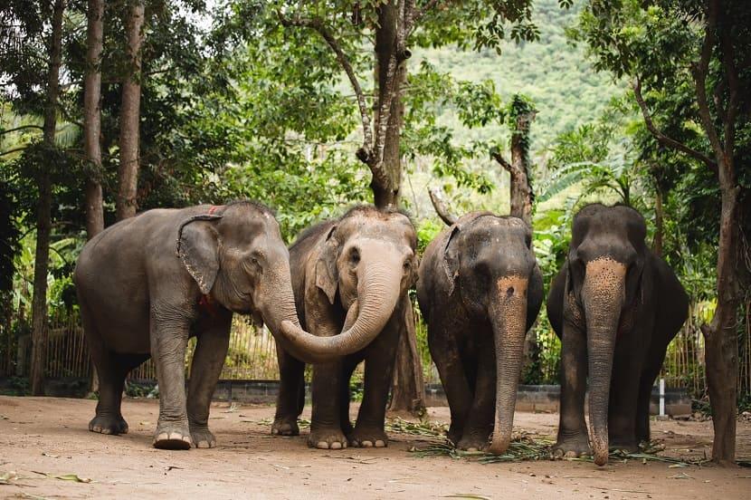 Слоновьи заповедники на Пхукете