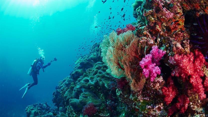 Подводное плавание на Пхукете