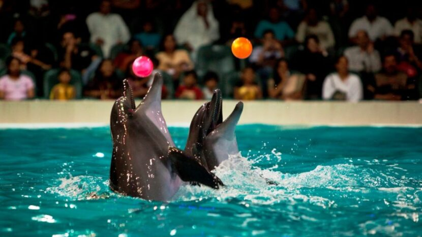 Dolphinarium Dolphin Bay