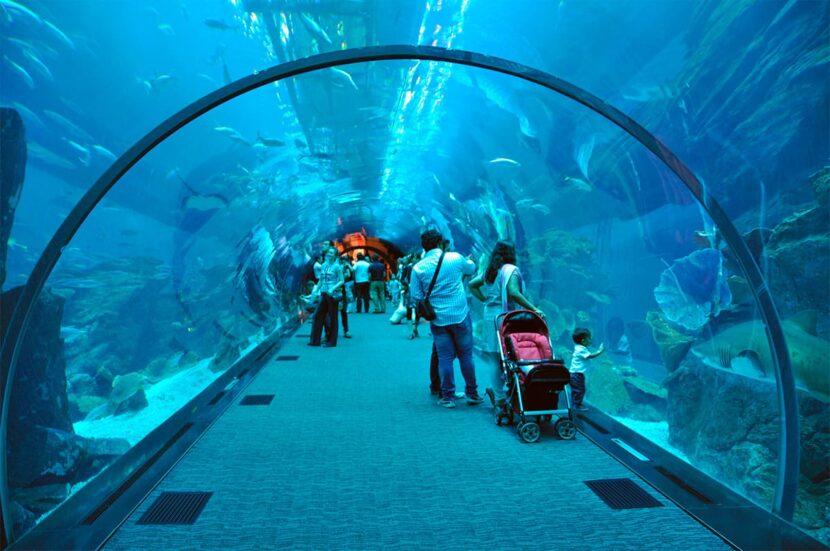 Дубайский аквариум и подводный зоопарк - цена, что посмотреть, фото