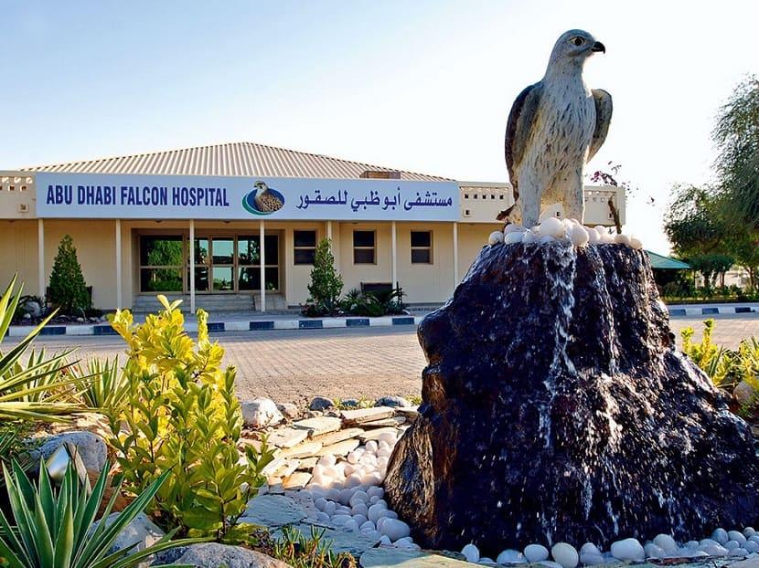 Соколиный госпиталь Абу-Даби
