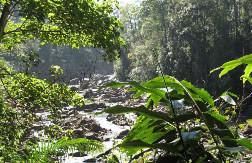 Кемпинг Rainforest в лесном заповеднике Китугала