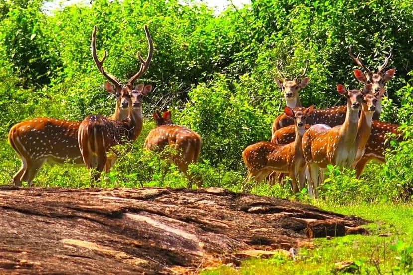 Udawalawe National Park, Colombo