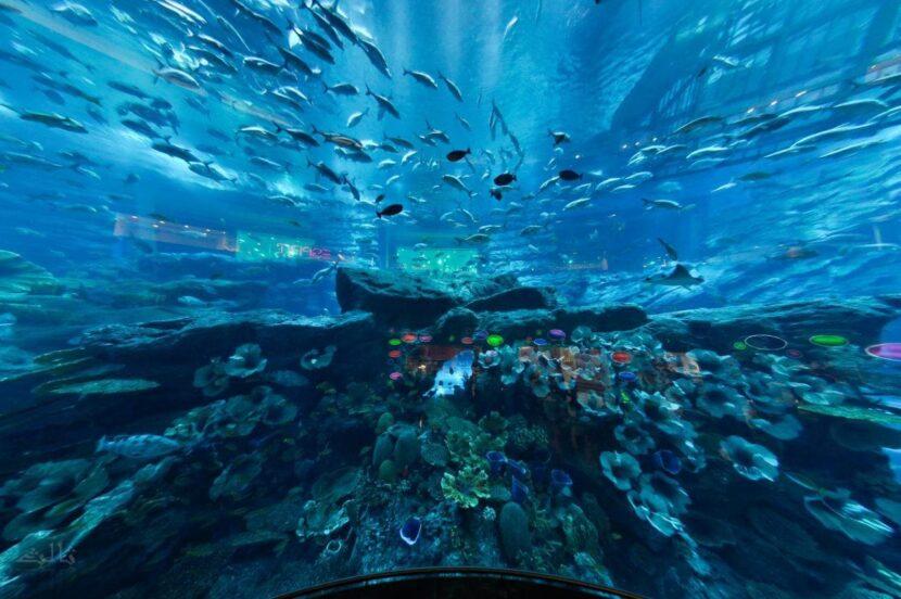 Подводный зоопарк