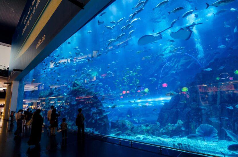 Бесплатный вид на Дубайский аквариум