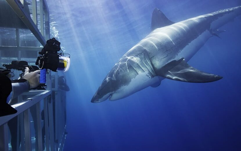 Встреча с акулами