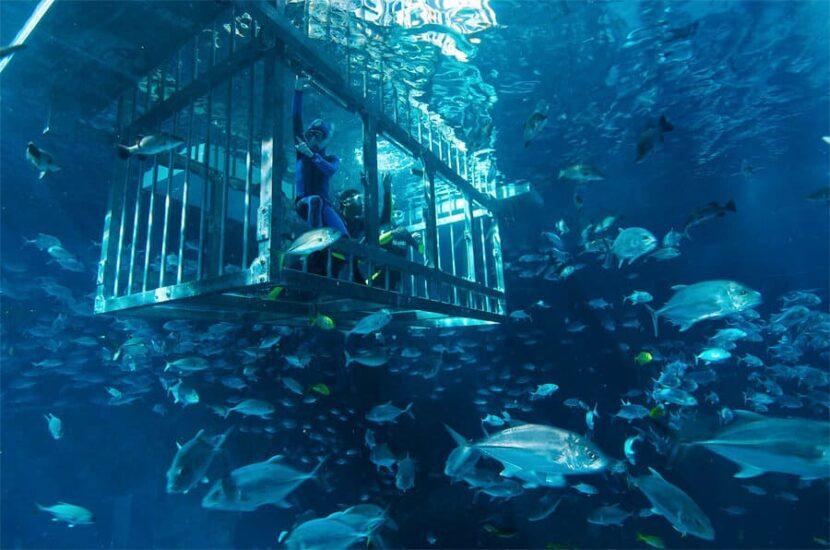 Подводное плавание в клетке