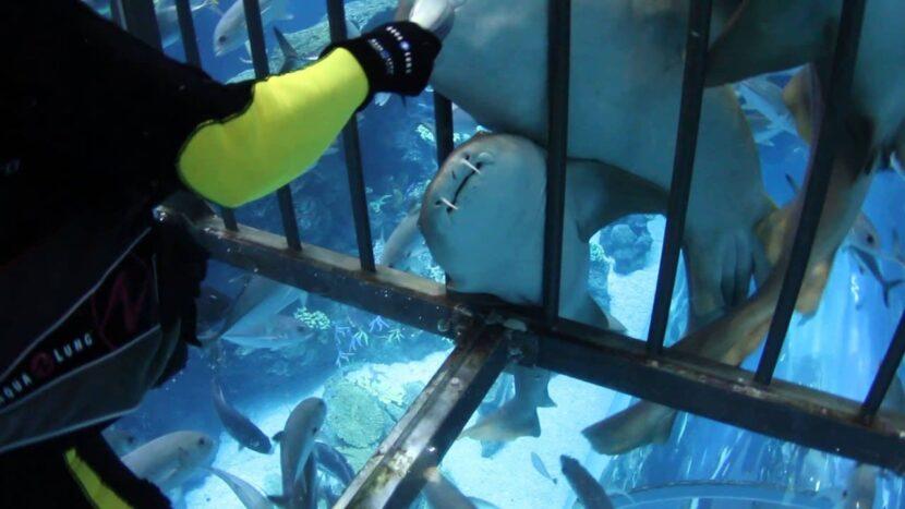 Ray Feeding & Shark Feeding