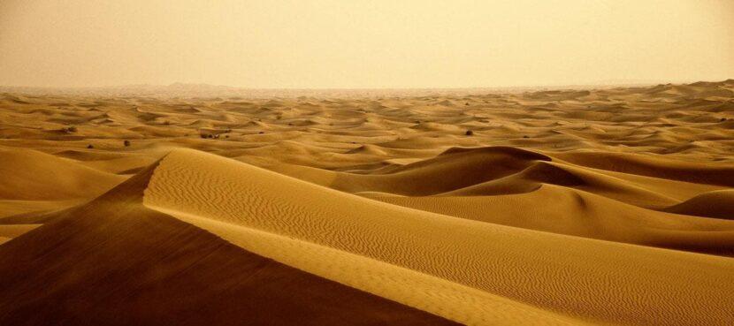 Сафари в Дубае