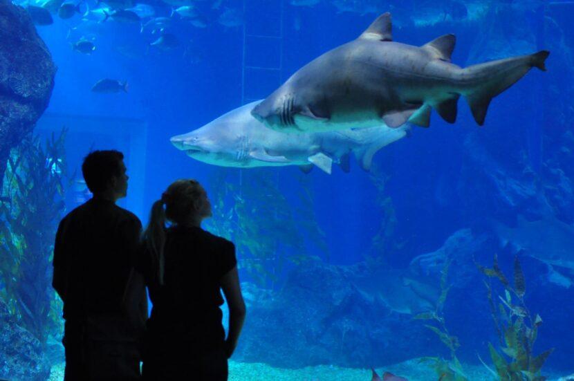 акулы в Дубайском аквариуме