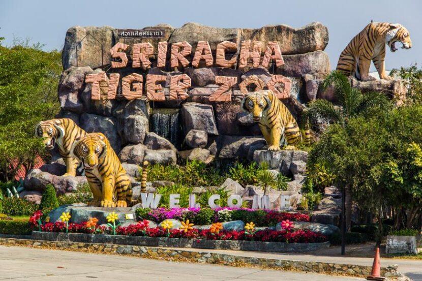 Тигровый Зоопарк Шрирача, Паттайя