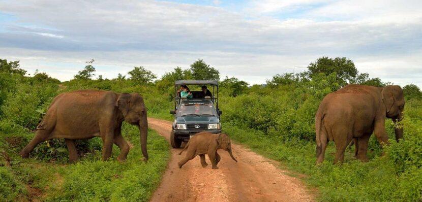 Отправляйтесь на сафари по дикой природе