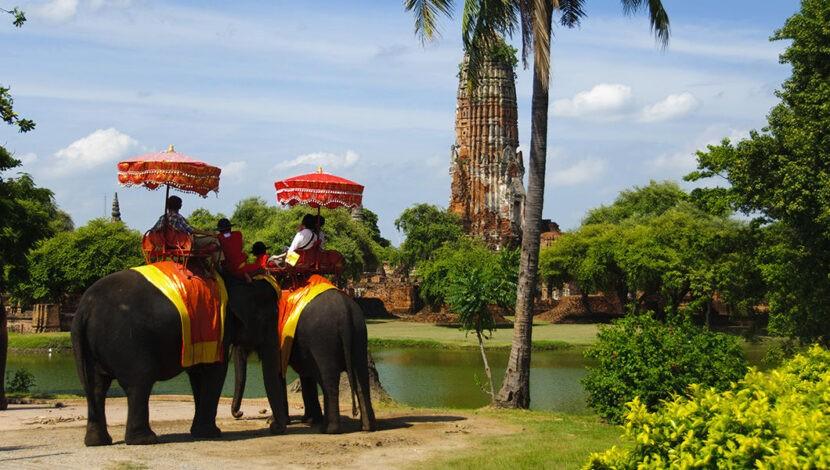 Лагерь слонов в Паттайе