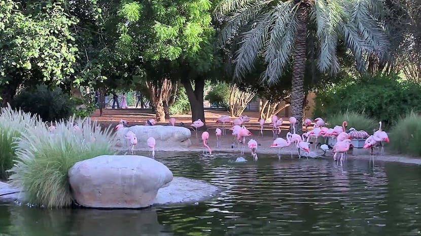 Зоопарк и аквариум Аль-Айна