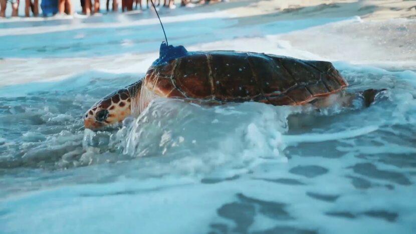 Дубайский проект реабилитации черепах