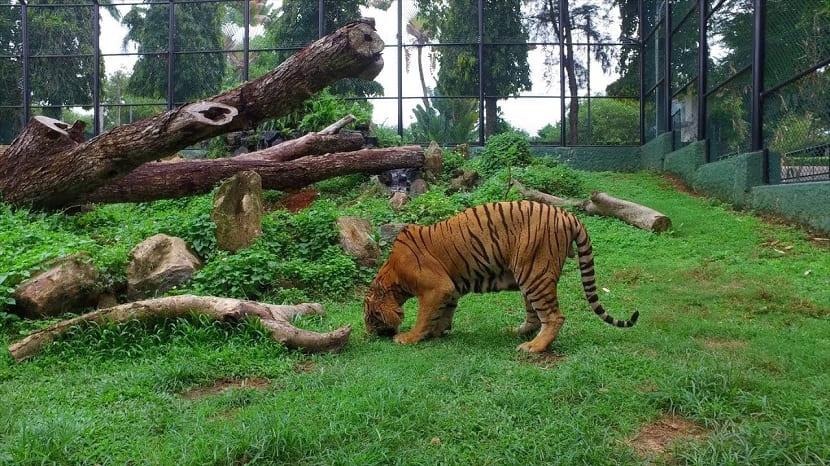 Dehival Zoo