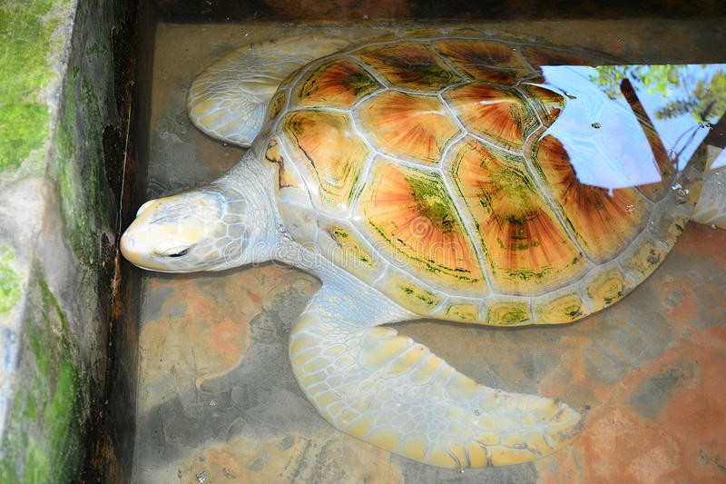 Инкубаторий черепах Касгода