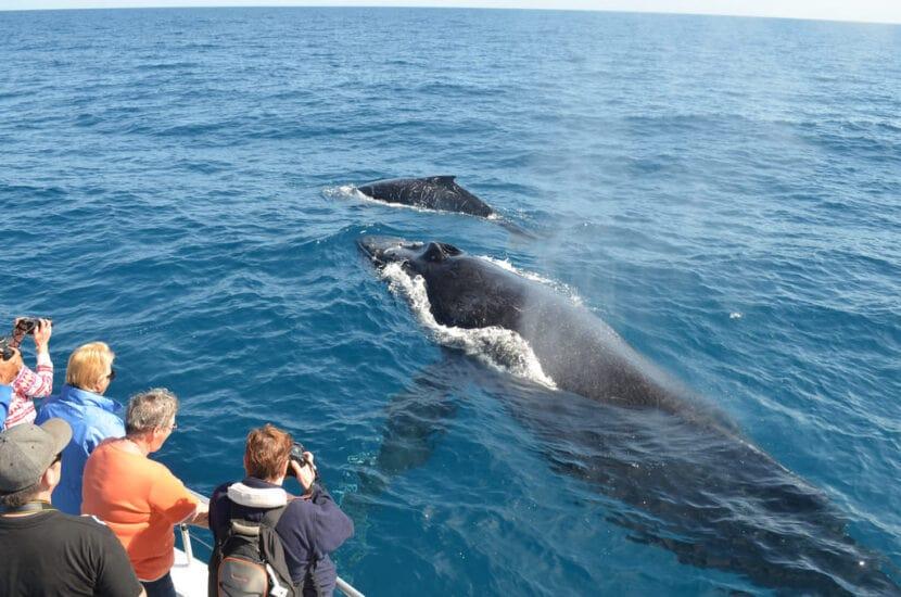 Наблюдение за китами в рыбном порту Мирисса