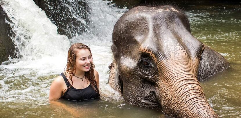 Заповедник Слоновьих Джунглей На Пхукете