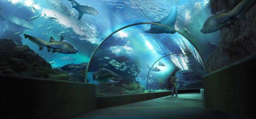 Ocean World в Бангкоке