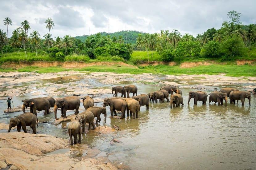 Pinnawela Elephant Shelter